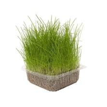 Hierba Natural para Gatos 100 Gr Nayeco